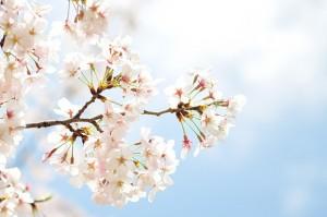 春は出会いの多い季節、同じ会社の新入社員と不倫をする夫